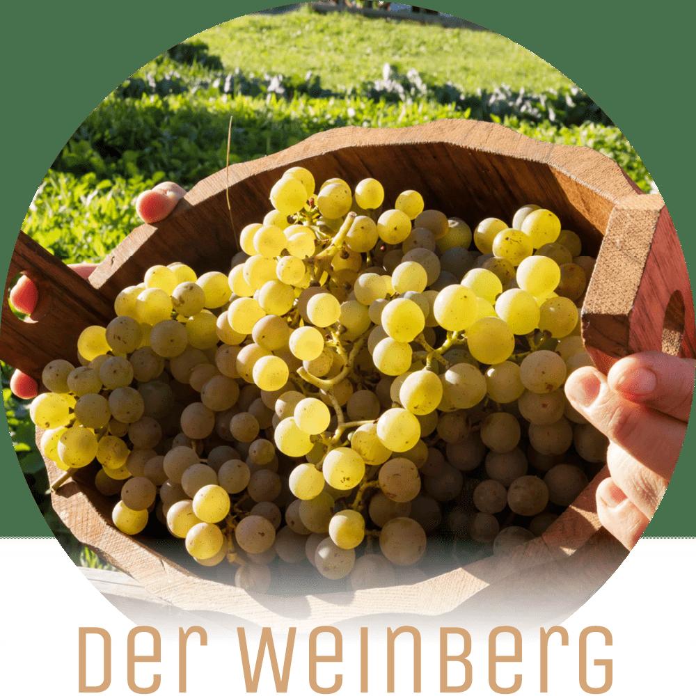 Lichtung Woldererhof - Hofeigenes aus unserem Weinberg