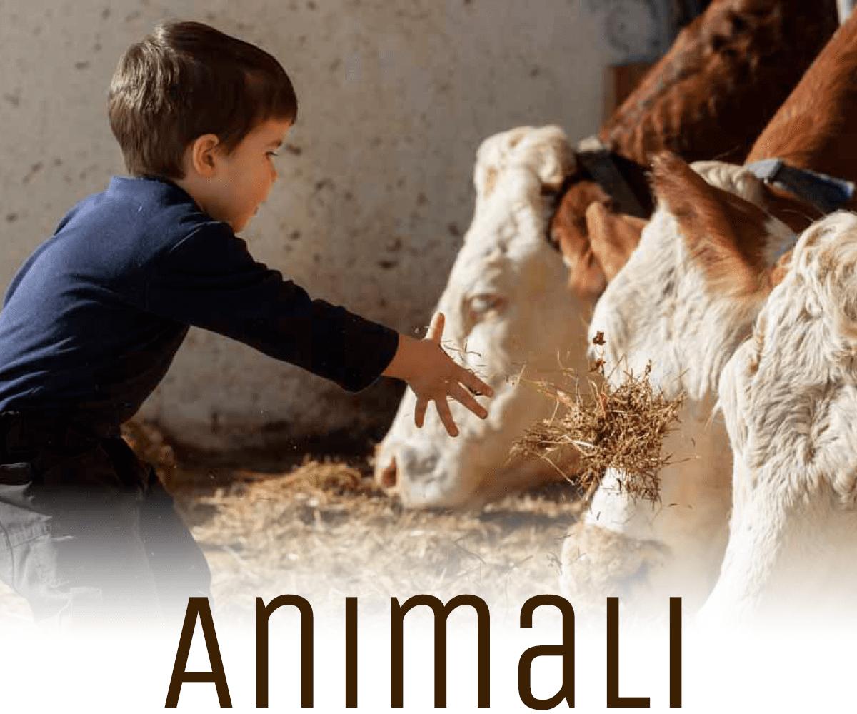Lichtung Woldererhof - Animali