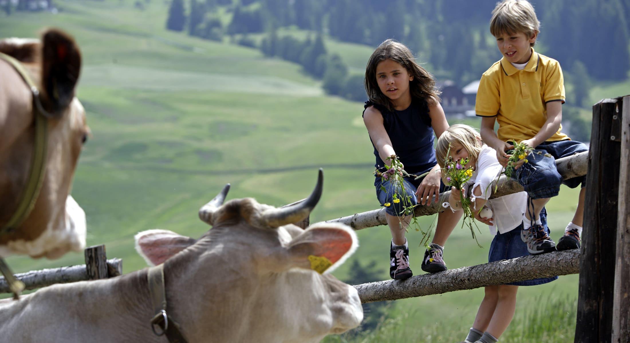 Lichtung Woldererhof - Urlaub im Sommer in Südtirol