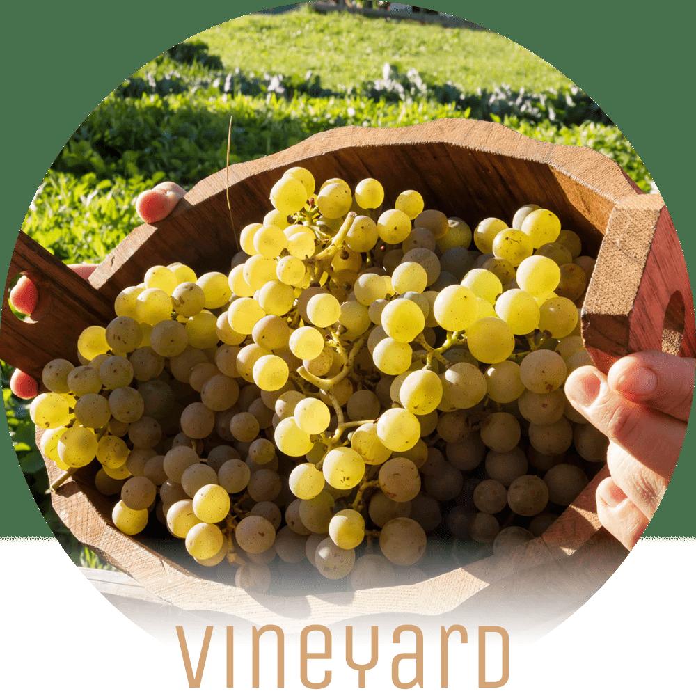 Lichtung Woldererhof - Vineyard